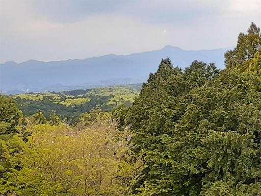 20210409・桜山展望台とあけぼの子どもの森08