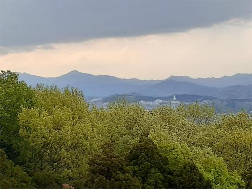 20210409・桜山展望台とあけぼの子どもの森05