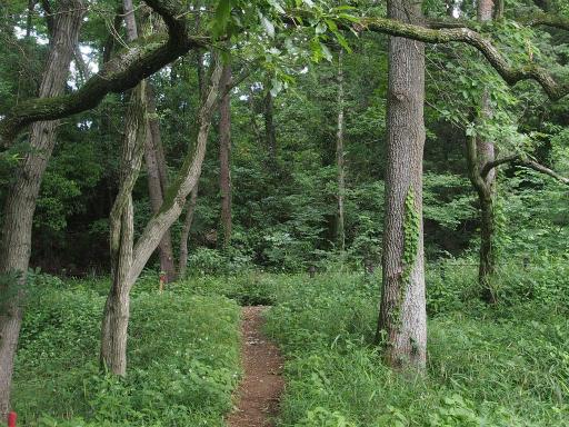 20170611・久々の緑の森1-04