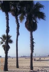 サンタモニカ海岸