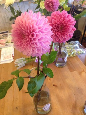 北九州市門司区の花屋ナチュリカの花の日持ち実験:BA剤の調整その2