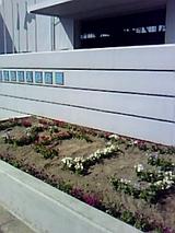 花TSC135
