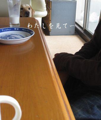 母ちゃんちの晩御飯とどたばた日記-視線
