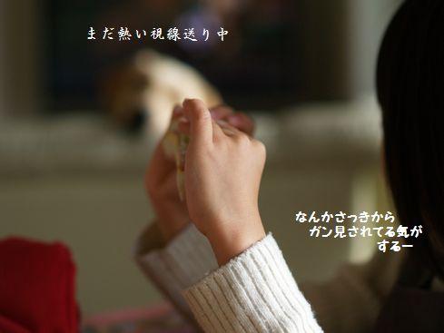 tenkichiのブログ-PC238950