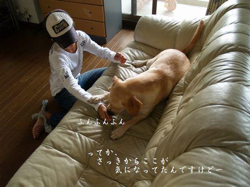 tenkichiのブログ-PA126918