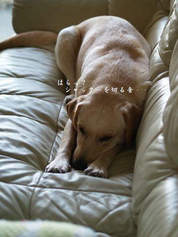 tenkichiのブログ-PC269193
