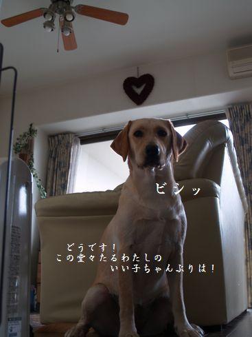 tenkichiのブログ-PC178593