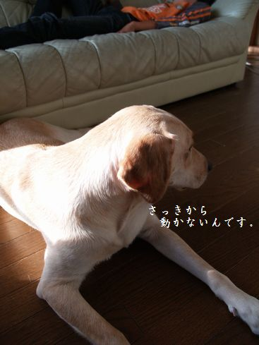 tenkichiのブログ-PA116895