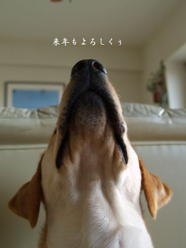 tenkichiのブログ-PC319450