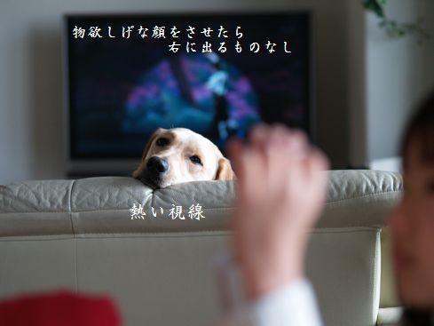 tenkichiのブログ-PC238945