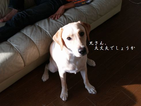 tenkichiのブログ-PA116893