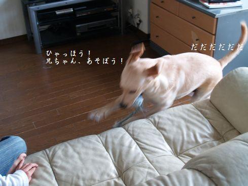 tenkichiのブログ-PA126912