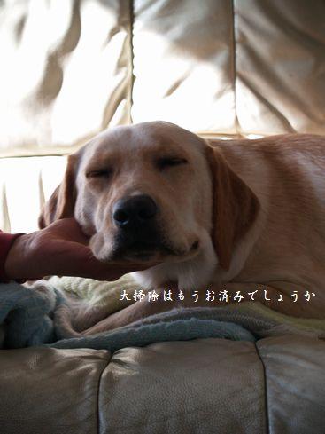 tenkichiのブログ-PC299330