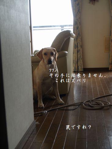 tenkichiのブログ-PC178586
