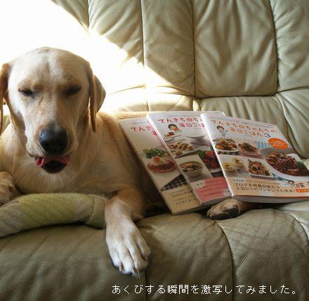 tenkichiのブログ-PB208035