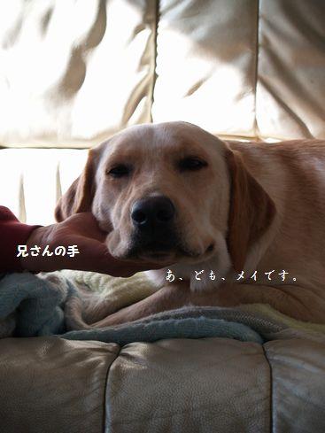 tenkichiのブログ-PC299328