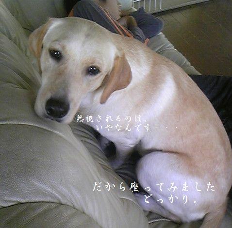 tenkichiのブログ-niisan2