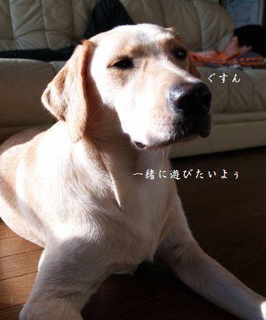 tenkichiのブログ-PA116896