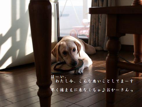 母ちゃんちの晩御飯とどたばた日記-P9066046
