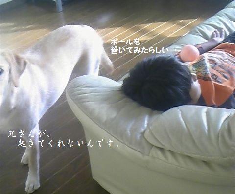 tenkichiのブログ-niisan1
