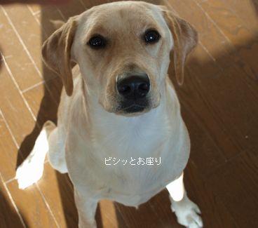 tenkichiのブログ-PB261092