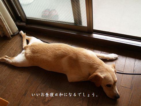 tenkichiのブログ-PA247249