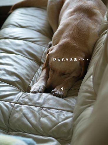 tenkichiのブログ-PC269191