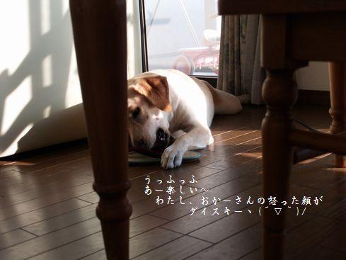 母ちゃんちの晩御飯とどたばた日記-P9066047