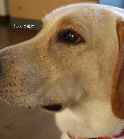 tenkichiのブログ-PB261109