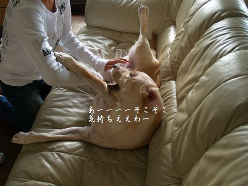 tenkichiのブログ-PA126923