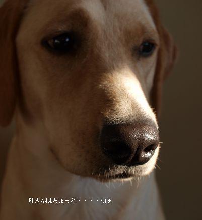 tenkichiのブログ-PB261102