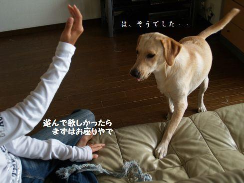 tenkichiのブログ-PA126913