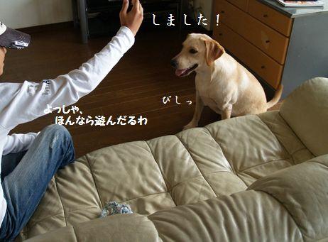 tenkichiのブログ-PA126914