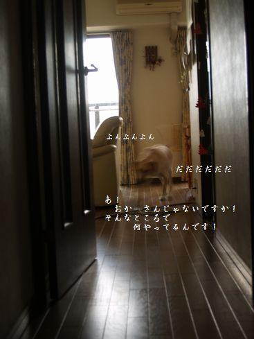 tenkichiのブログ-PC178583