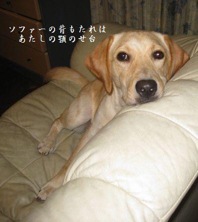 tenkichiのブログ-20081015125013