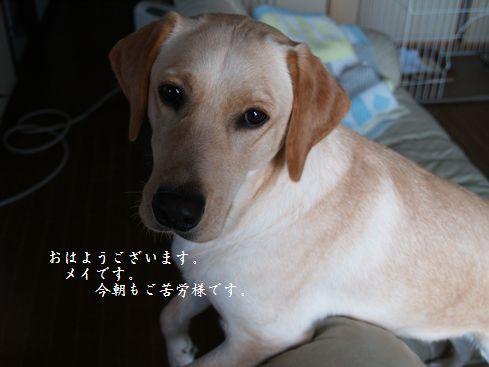 tenkichiのブログ-PC218894