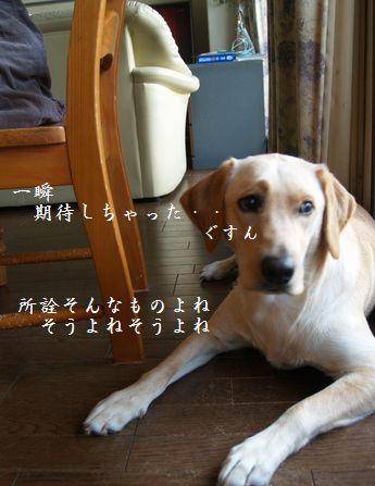 tenkichiのブログ-PC238938