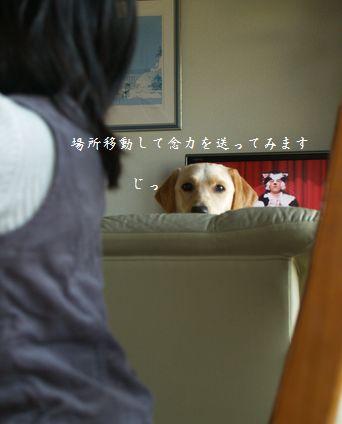 tenkichiのブログ-PC238944