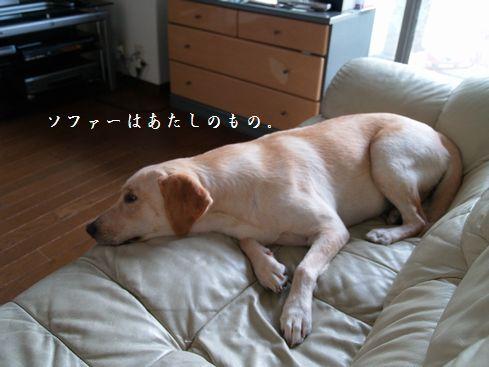tenkichiのブログ-PA066747