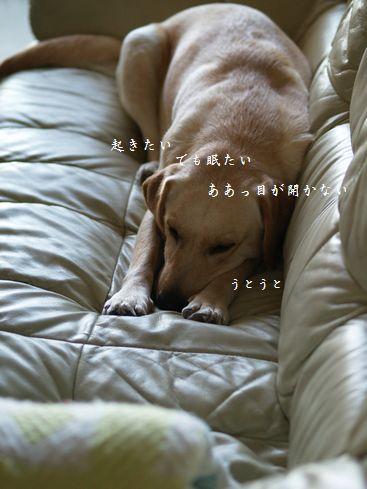 tenkichiのブログ-PC269194