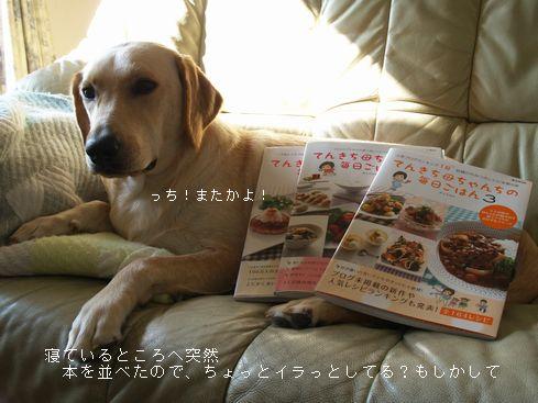 tenkichiのブログ-PB208032