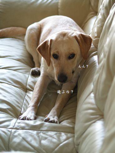 tenkichiのブログ-PC269192