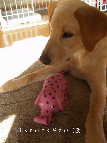 ピンクの水玉象さん