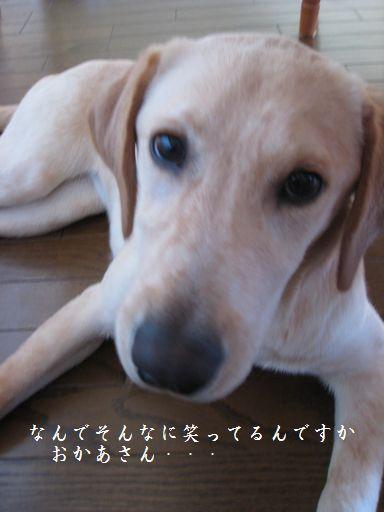 tenkichiのブログ-目が覚めちゃった