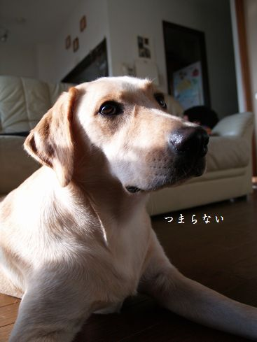 tenkichiのブログ-PA116898