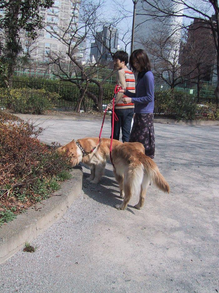 ワンちゃんのお散歩