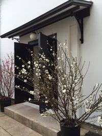 第4回書研印社篆刻展ギャラリー入口桃の花