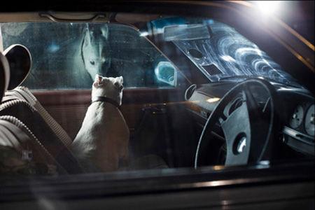 DogsinCars2_
