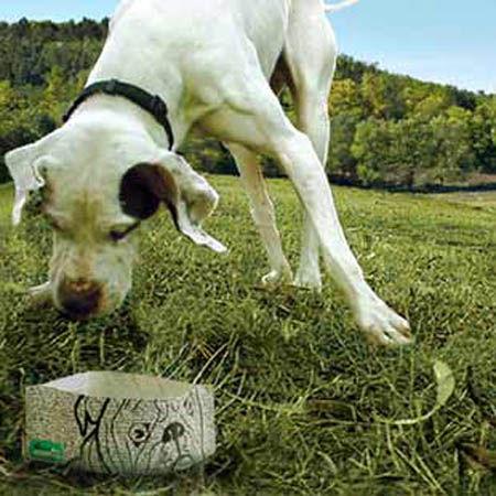 bowldog_3_pack_4dc27bce3d3f3