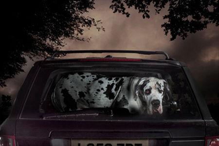 DogsinCars1__0